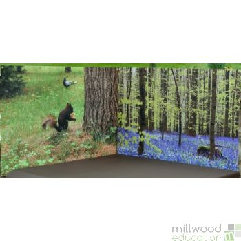Wallscapes WOODLAND