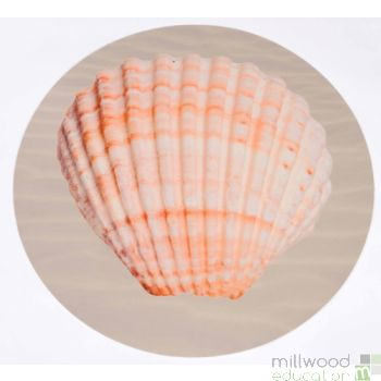Shell Scallop Playmat