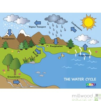 Water Cycle Wallboard
