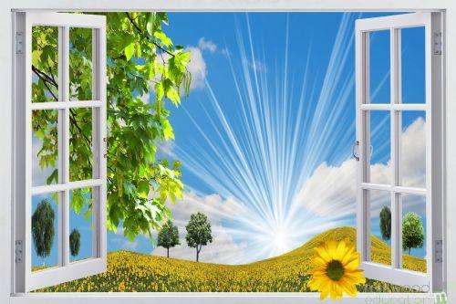 Windows to the World - Sunflower (Medium)