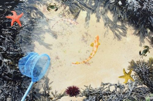 Images In Nature Playmat Rockpool