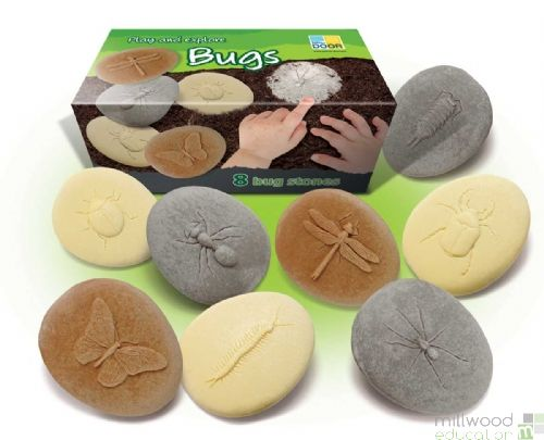 Play And Explore Bugs