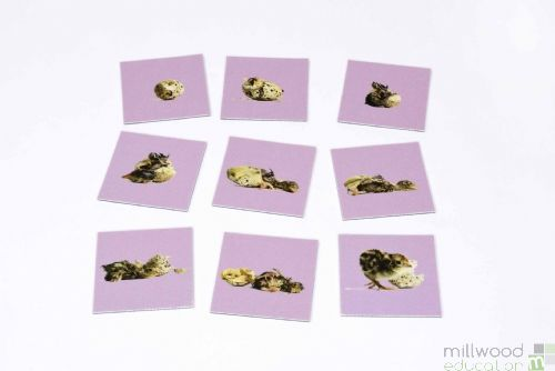 Sequencing Tiles (Hatching Chick)