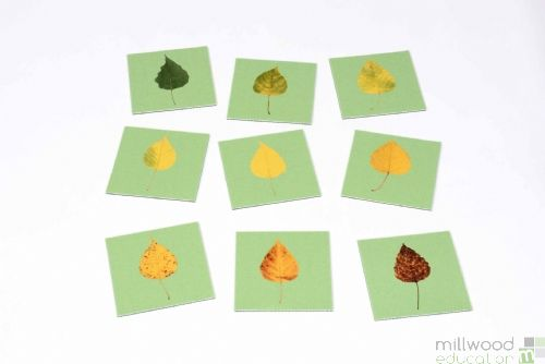 Sequencing Tiles (Turning Leaf)