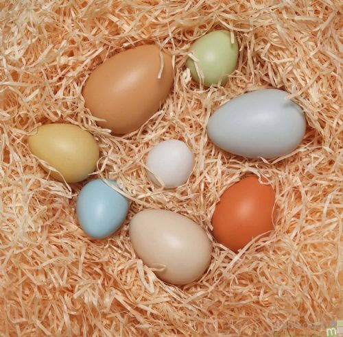 Size Sorting Eggs