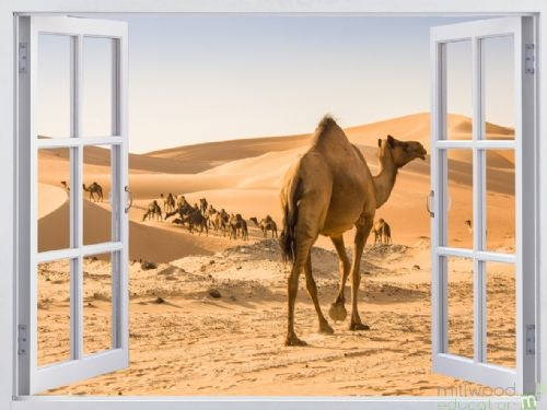 Windows to the World - Desert (Large)