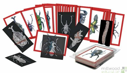 Insects X-Ray & Picture Cards